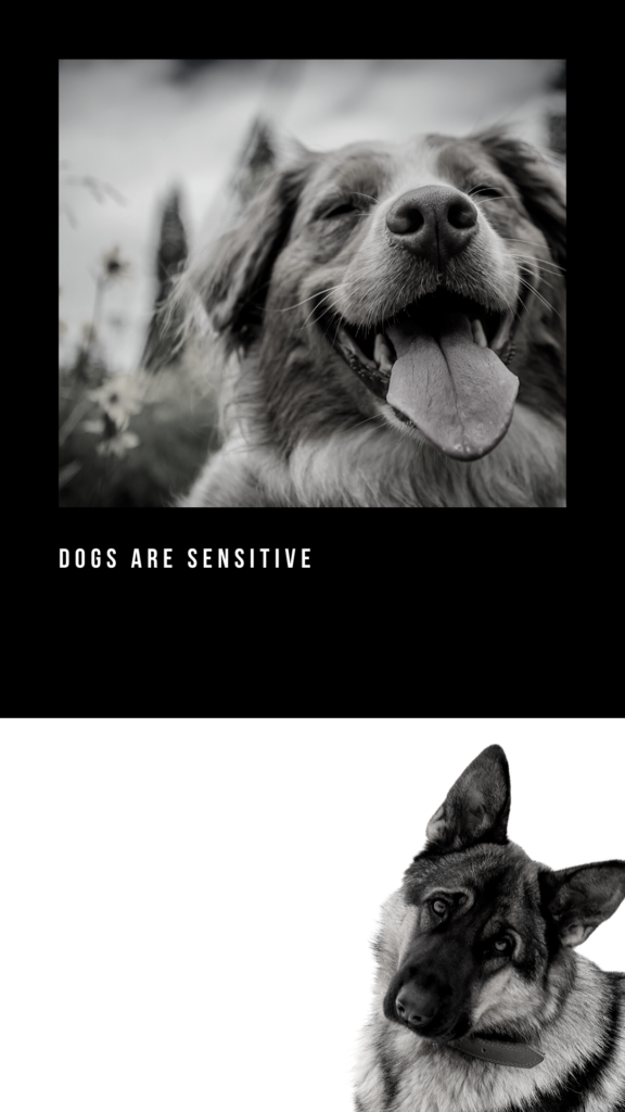 dogs see spirits
