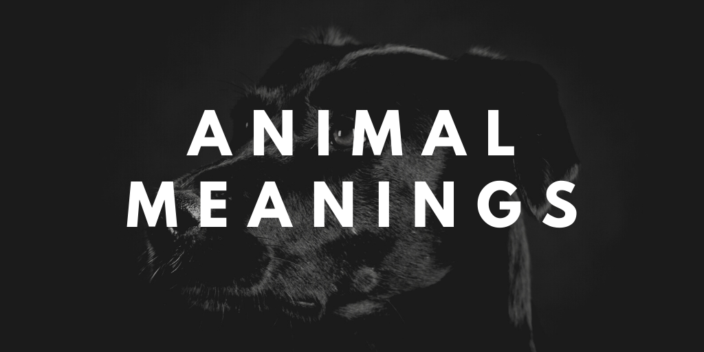 animal meanings