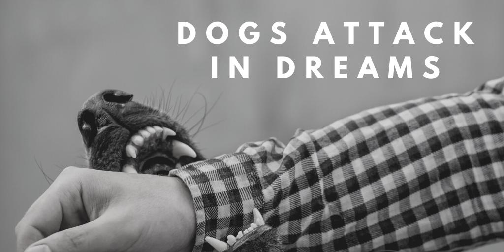dogs attack dream