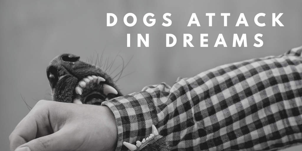dogs attack dream