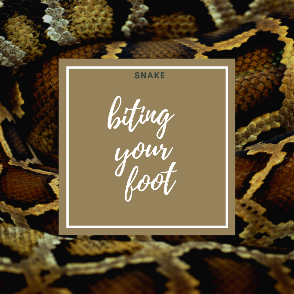 snake bite on foot