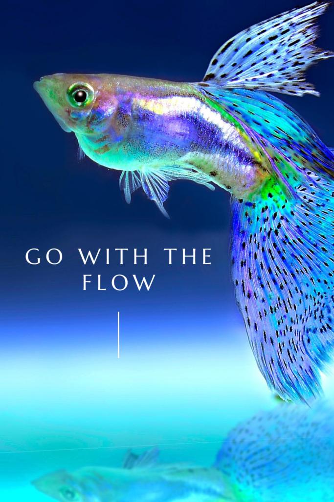 fish in dreams