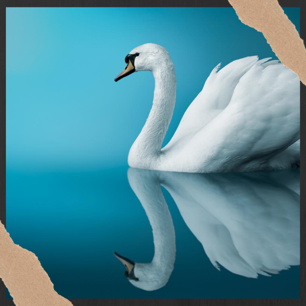 are birds messengers