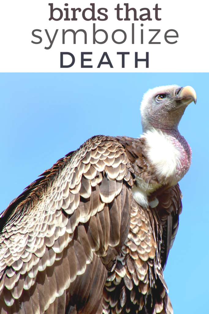 birds that symbolize death