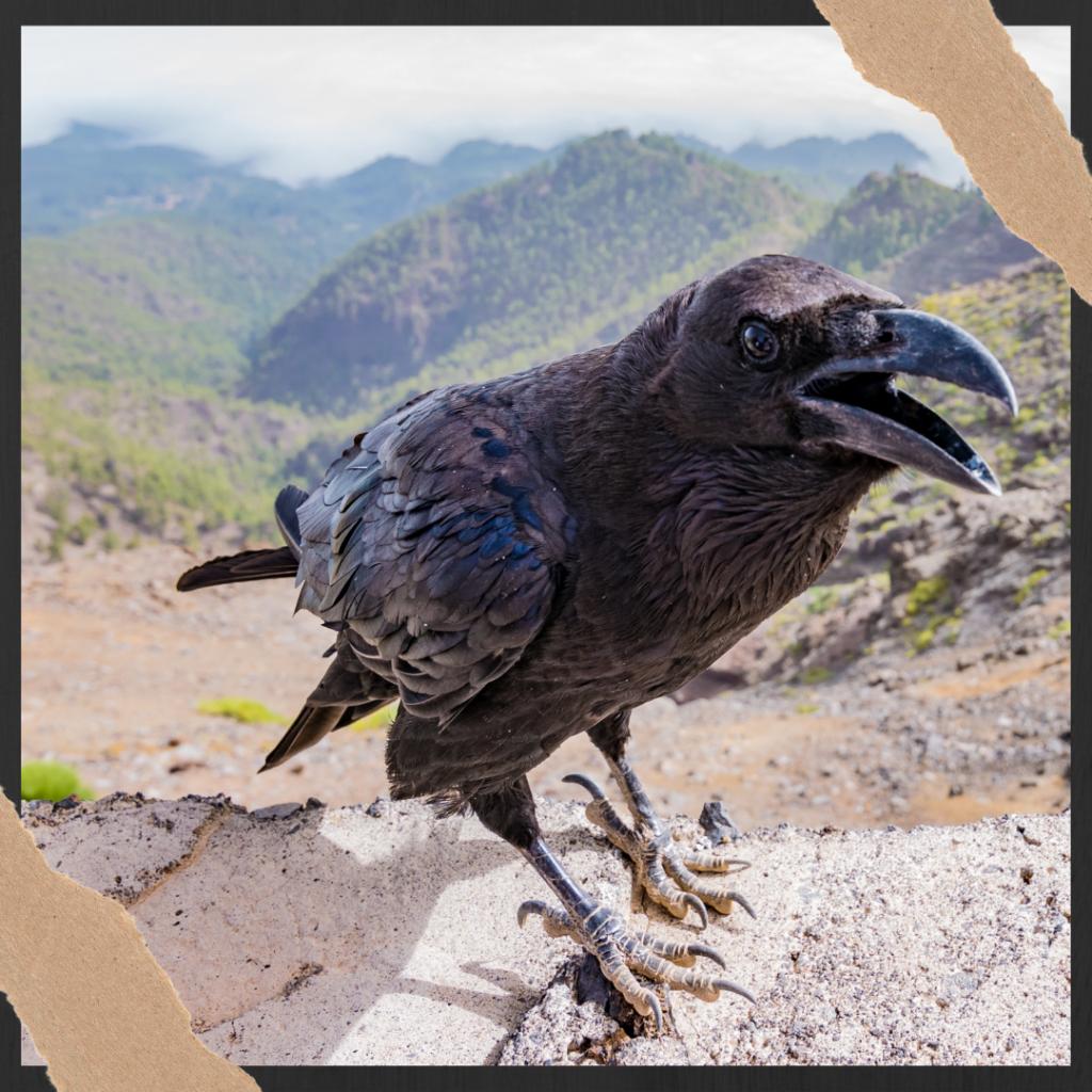 crow bird death symbol