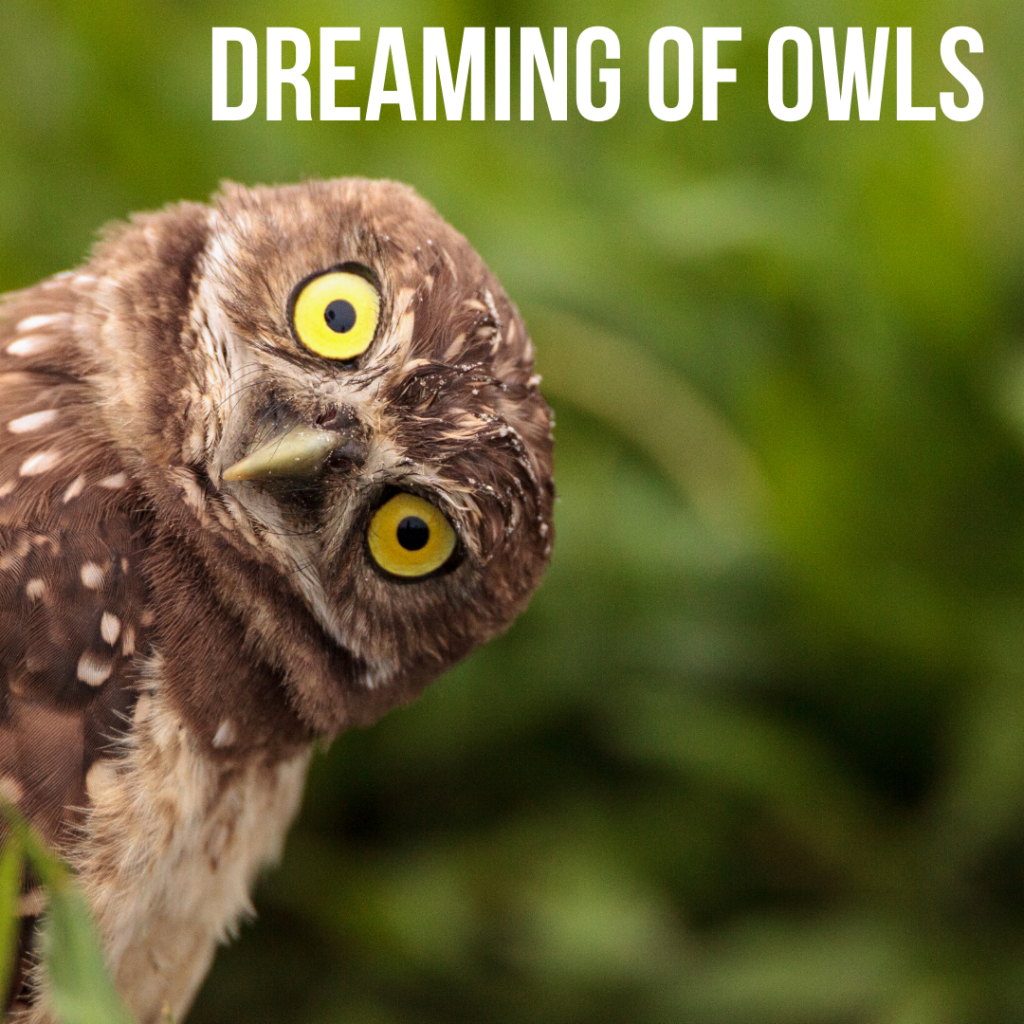 dreaming of owls