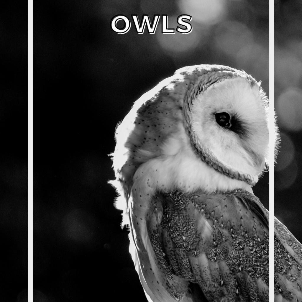 owl spirit guides