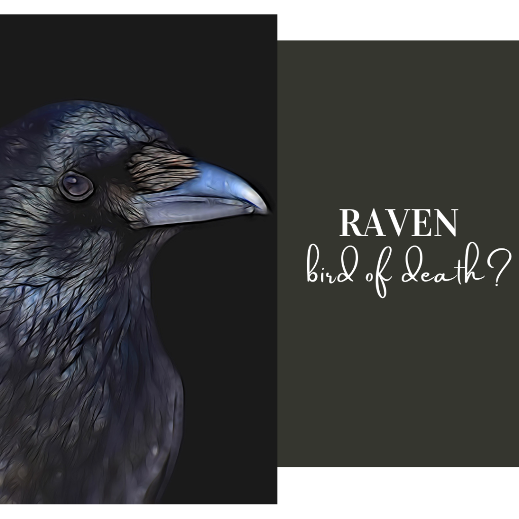raven bird of death