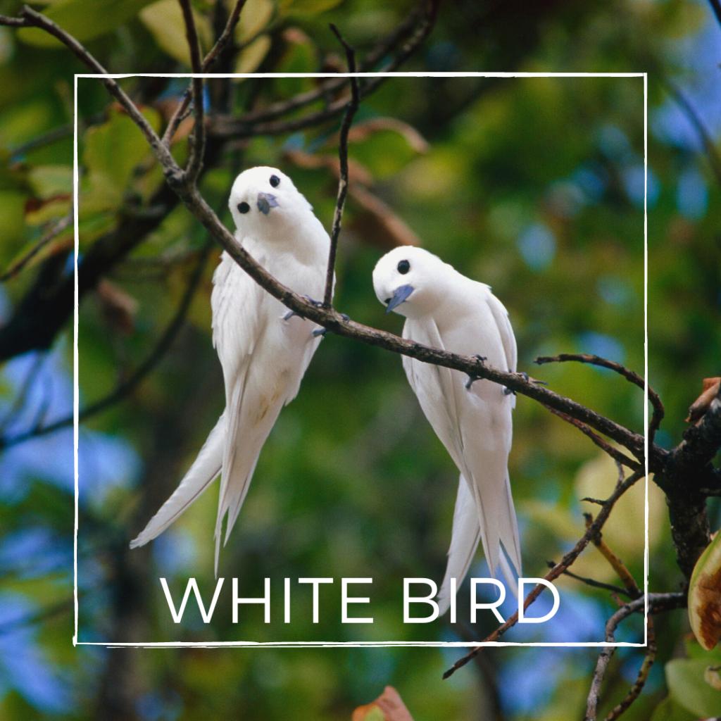 white bird symbol