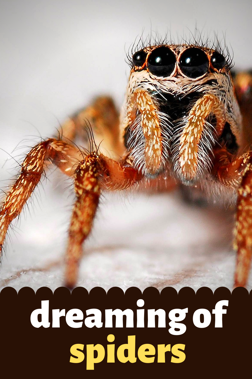 dreaming of spiders
