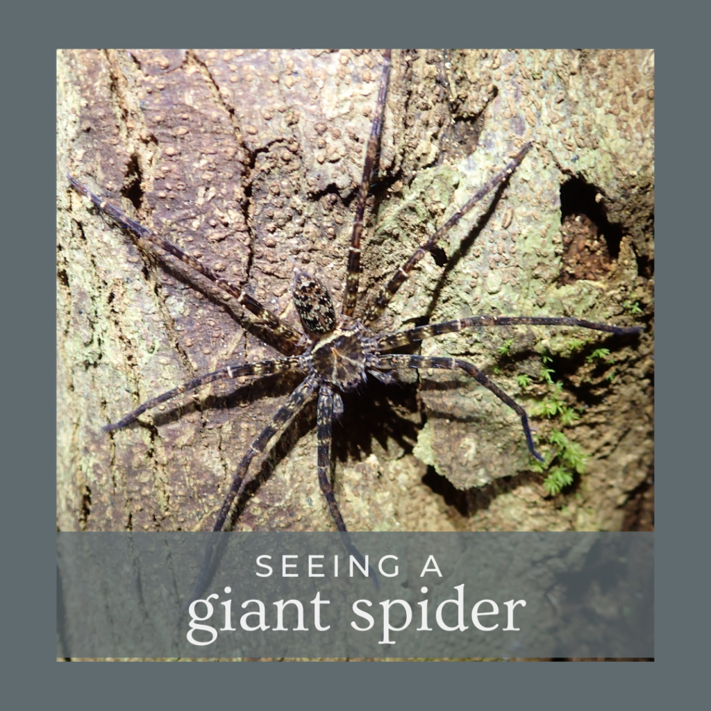 seeing a giant spider