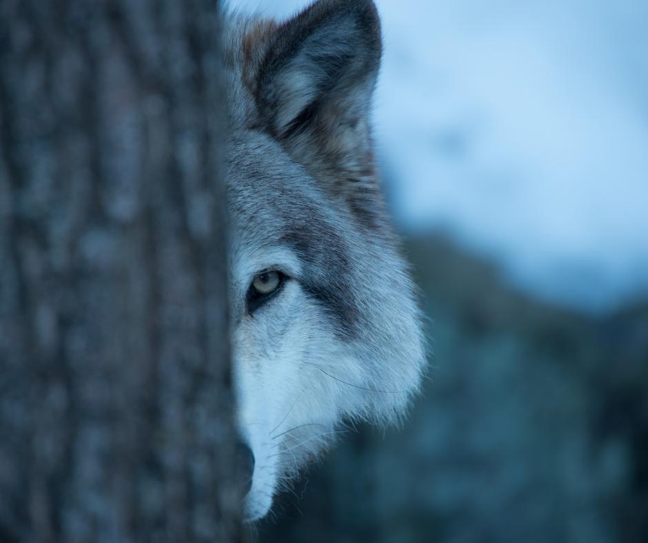 delta wolf