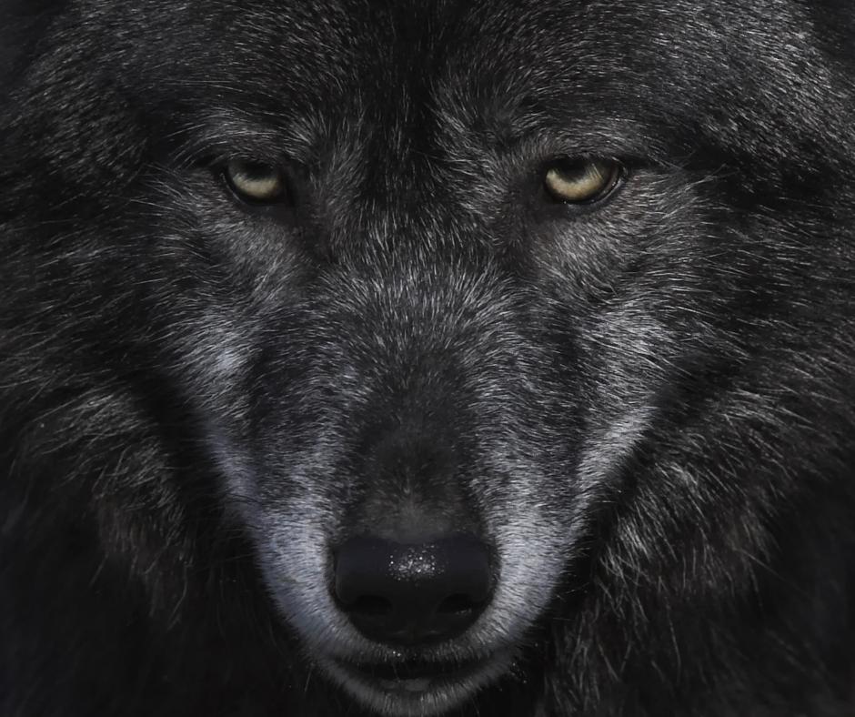 becoming a werewolf