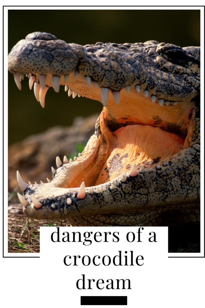 crocodile dream