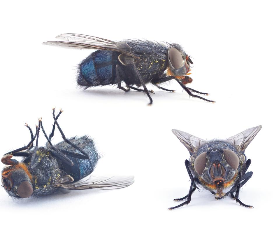 flies attracted to demons