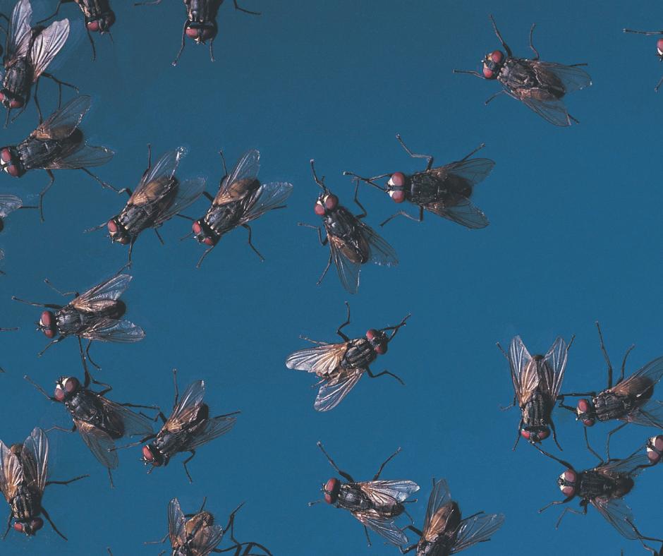 flies in the bible